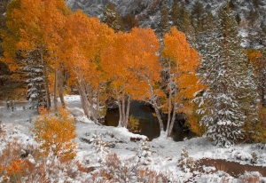 Barbara Evans Barbour landscape color digital photography pigment ink archival quality aspens snow sierra nevada mountains June Lake